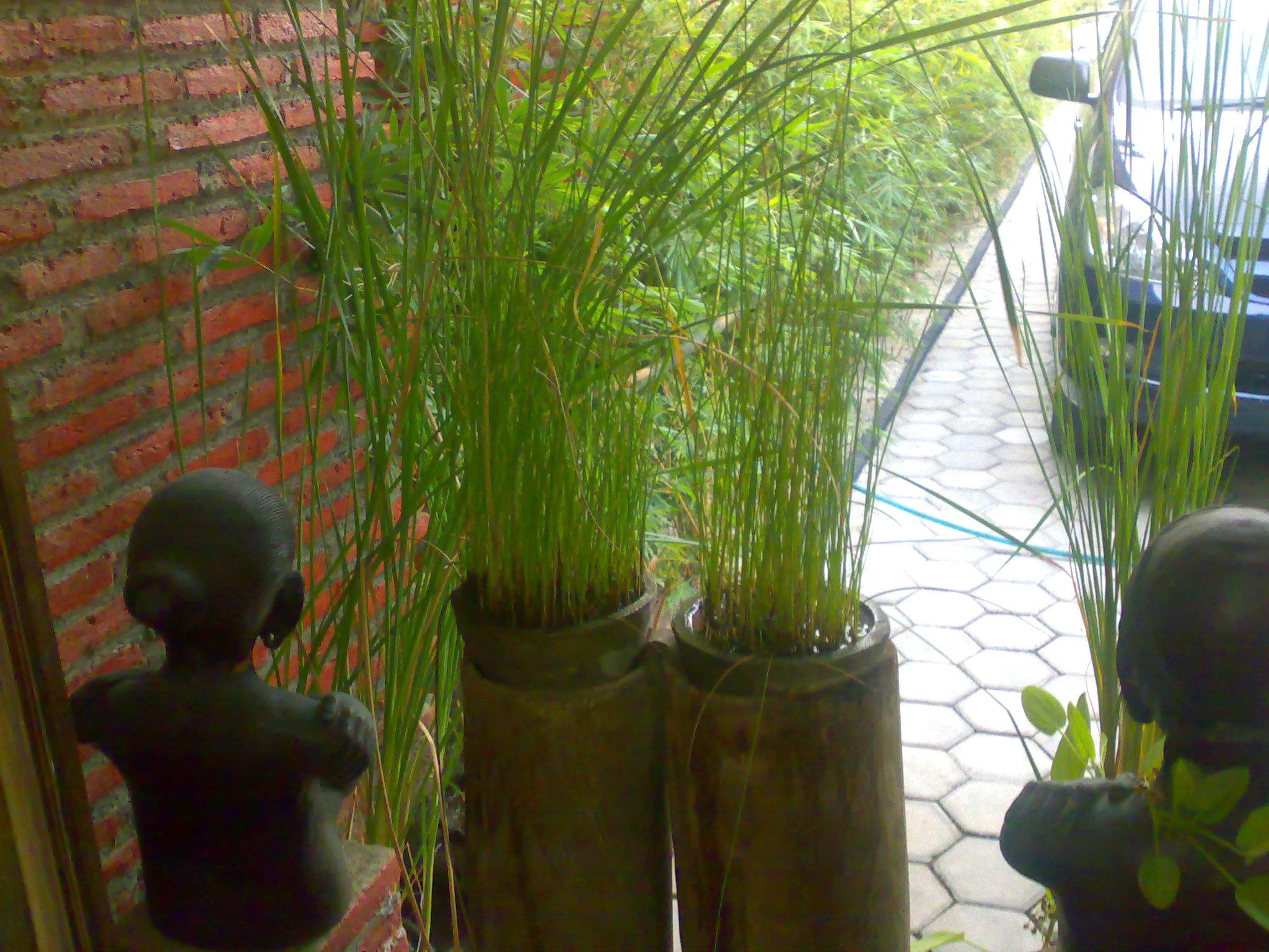 Gambar Pot Bunga Dari Bahan Bekas patung mbah jingkrak dan difungsikan ...